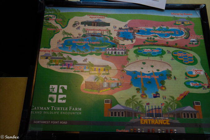 Turtle Farm Grand Cayman Map